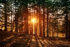 Bel horizontal de forêt images stock
