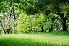 Bel horizontal de forêt Pelouse dans la forêt verte de ressort photos stock