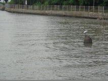 Bel horizontal de l'eau photo stock