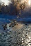 Bel horizontal de l'hiver Image libre de droits