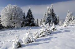 Bel horizontal de l'hiver avec les arbres neigeux Photographie stock