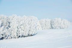 Bel horizontal de l'hiver avec les arbres neigeux Image libre de droits