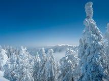 Bel horizontal de l'hiver dans les montagnes Fond de Noël avec les arbres impeccables couverts dans la neige, crêtes de montagne  photo stock