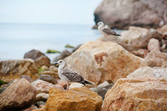 Bel horizontal de mer Composition de nature Photos libres de droits