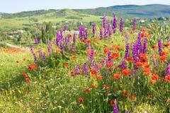 Bel horizontal de pays d'été avec des fleurs. Photos libres de droits