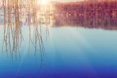 Bel horizontal de source Le base-ball de saule dans la lueur du coucher du soleil au-dessus du lac photos stock