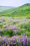 Bel horizontal rural Photo stock
