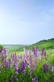 Bel horizontal rural Photos stock
