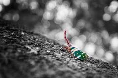 Bel insecte de lune blanc et noir et coloré Images libres de droits