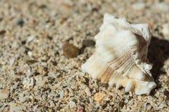 Bel interpréteur de commandes interactif de mer sur le sable Photos libres de droits