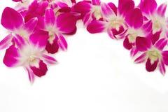 Bel isolat violet de frontière d'orchidée Image libre de droits