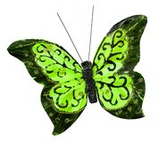 Bel insecte de papillon de vert de ressort Photo stock