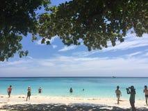 Bel océan bleu encadré avec des arbres Image stock