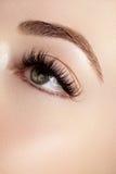Bel oeil femelle avec de longs cils extrêmes, maquillage noir de revêtement Maquillage parfait, longues mèches Yeux de mode de pl photographie stock