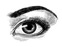 Bel oeil femelle tiré par la main, croquis Maquillage, symbole de salon de beauté Illustration de vecteur de vintage illustration libre de droits