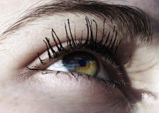 Bel oeil vert Photos stock