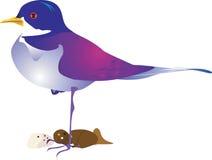 Bel oiseau illustration stock