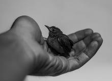 Bel oiseau Photographie stock libre de droits