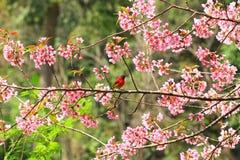 Bel oiseau Photo stock