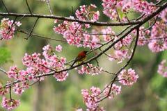 Bel oiseau Images stock