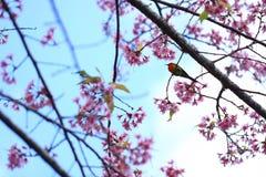 Bel oiseau Image libre de droits