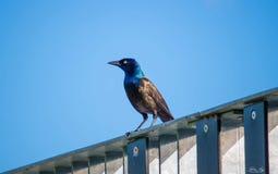 Bel oiseau appréciant le jour ensoleillé Images stock