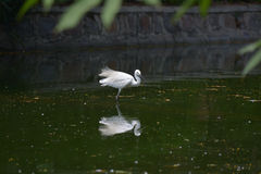 Bel oiseau blanc photo libre de droits