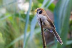 Bel oiseau brun avec le fond de tache floue Photographie stock libre de droits
