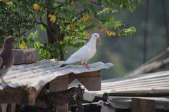 bel oiseau dans la maison Photographie stock libre de droits