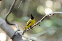 Bel oiseau dans un sauvage Images stock