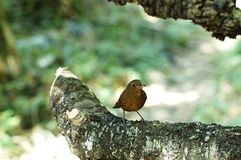 Bel oiseau dans un sauvage image libre de droits