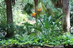 Bel oiseau des fleurs de paradis Images stock