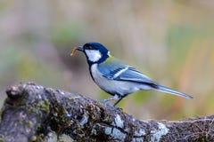 Bel oiseau mangeant un ver Image libre de droits
