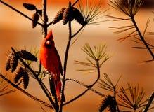 Bel oiseau rouge se reposant sur la branche Image libre de droits