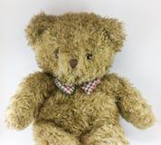 Bel ours de nounours brun avec le fond blanc Photo libre de droits