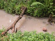 Bela przez wodnego sposób Zdjęcie Stock