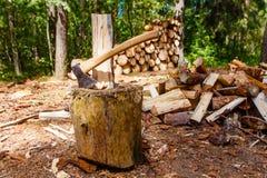 Bela rozszczepia w sosnowym lasowym łupka stosie zdjęcie royalty free