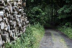 Bela stosu sterty drewna lasowego śladu sposobu kałuży krajobrazu borowinowy drogowy offroad tło Fotografia Royalty Free