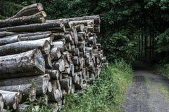 Bela stosu sterty drewna lasowego śladu sposobu kałuży krajobrazu borowinowy drogowy offroad tło Zdjęcie Royalty Free