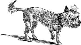 Belachelijke hond Royalty-vrije Stock Afbeeldingen