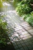 Belade med tegel trädgårds- banabakgrund, solig dag, ljus och skuggor Royaltyfria Bilder