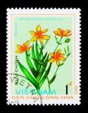 Belamcanda chinensis, serie delle piante medicinali, circa 1975 Fotografie Stock