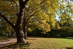 Belamente árvore Imagem de Stock Royalty Free