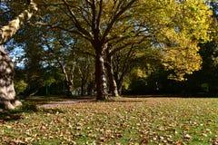 Belamente árvore Fotos de Stock Royalty Free