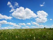 Belamente dia de verão Fotos de Stock