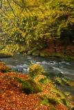 Belamente uma floresta de fluxo do outono do rio Fotos de Stock