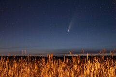 Free Belarus. 17 July 2020. Comet Neowise C/2020 F3 Shines Bright In The Night Starry Sky Above Young Wheat Field. Night Stock Photo - 190867320
