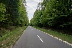 belarus A estrada a Belovezhskaya Pushcha 23 de maio de 2017 fotografia de stock