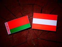 Belarus flag with Austrian flag on a tree stump  Stock Photo
