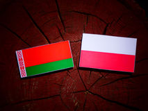 Belarus flag with Polish flag on a tree stump isolated. Belarus flag with Polish flag on a tree stump royalty free illustration
